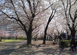 KIMG01570408中央公園no2.JPG
